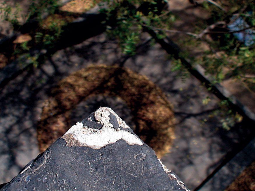 Brown Leaves (2007)